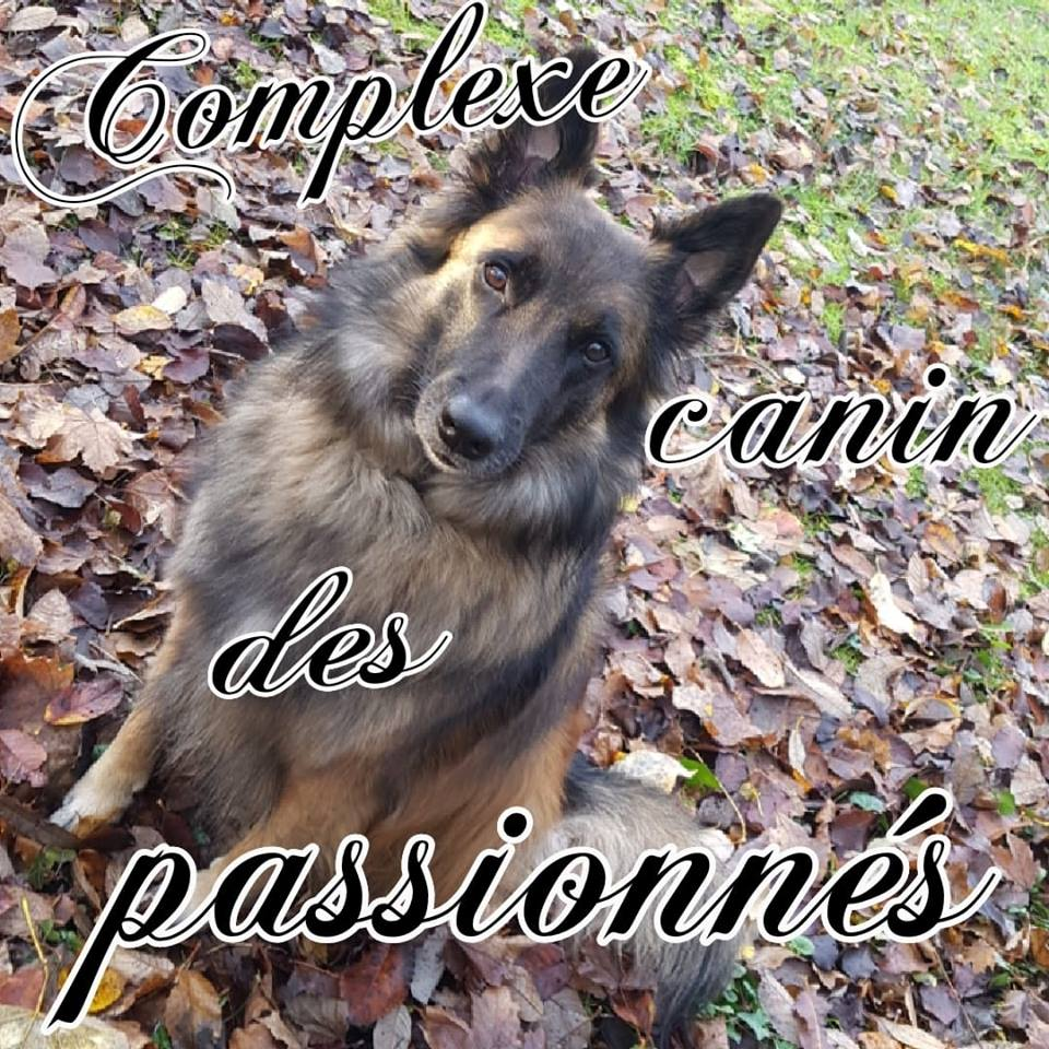 Elodie Taillieu-Educateur canin-livraison à domicile-lille-valenciennes